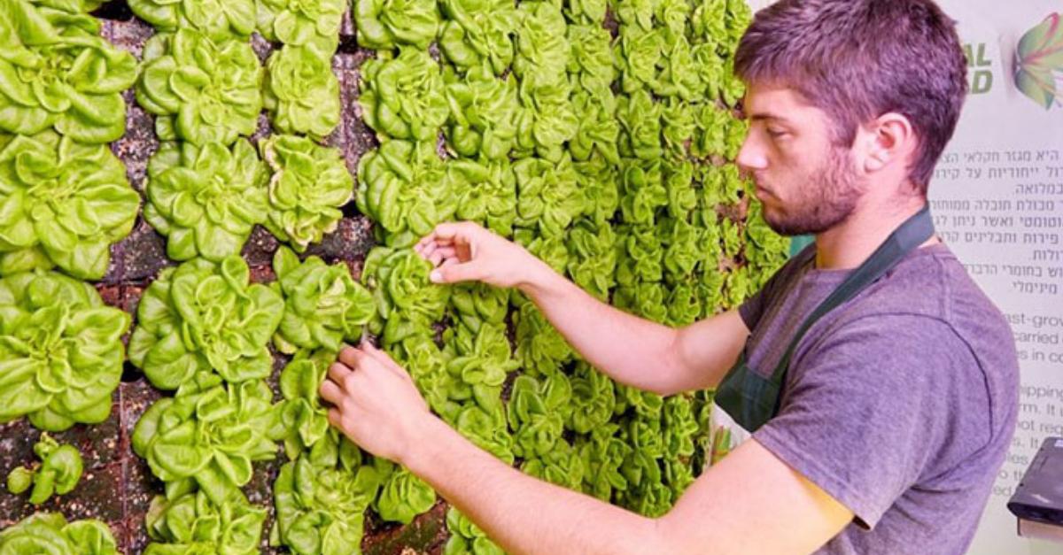 ירקות על הקיר