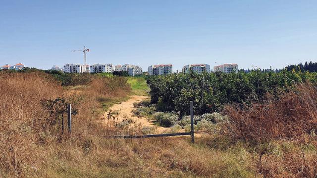 שטח השכונה החדשה במערב העיר