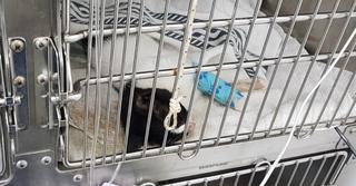 חתול בכלוב | צילום: המחלקה הווטרינרית