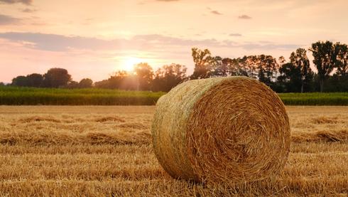 הצעירים לחקלאות | צילום אילוסטרציה: Pixabay